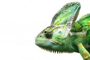 reptile-316281_960_720