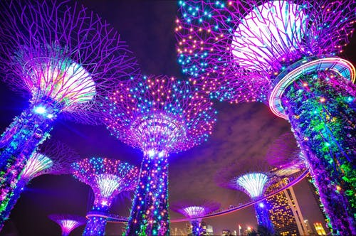colorful lights in night time