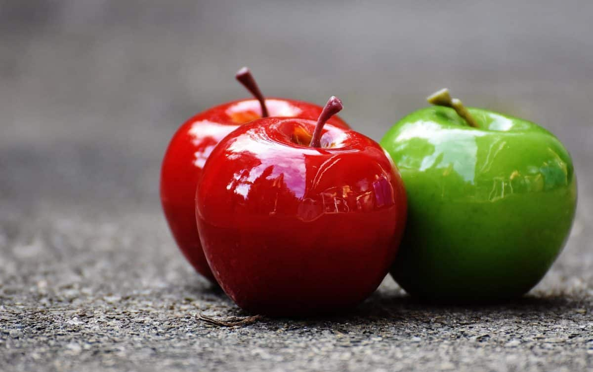 pair of apples for photography subject